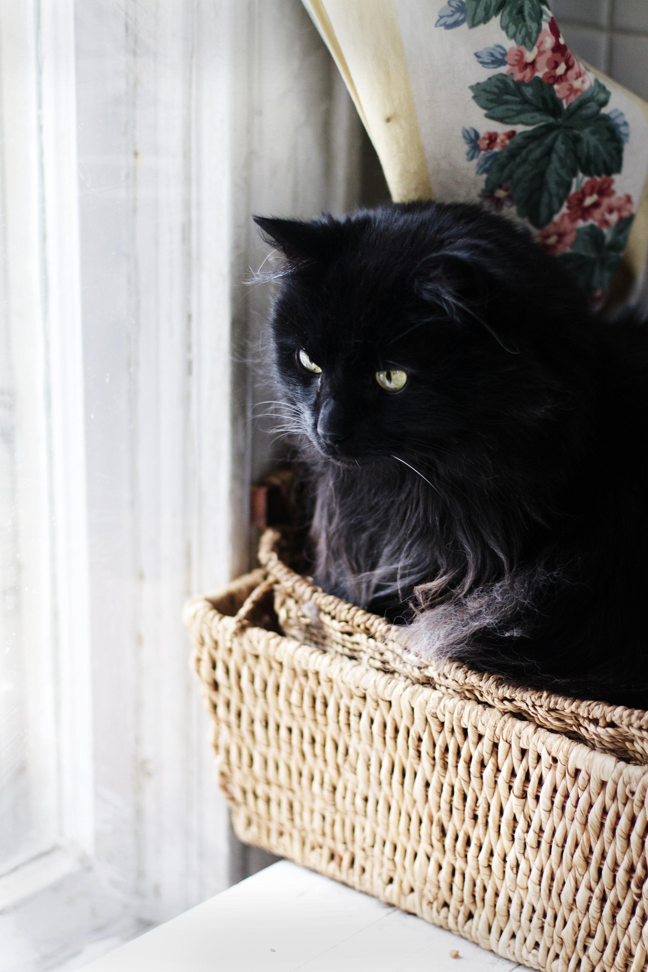 Cats & Cookies | Ruby Josephine