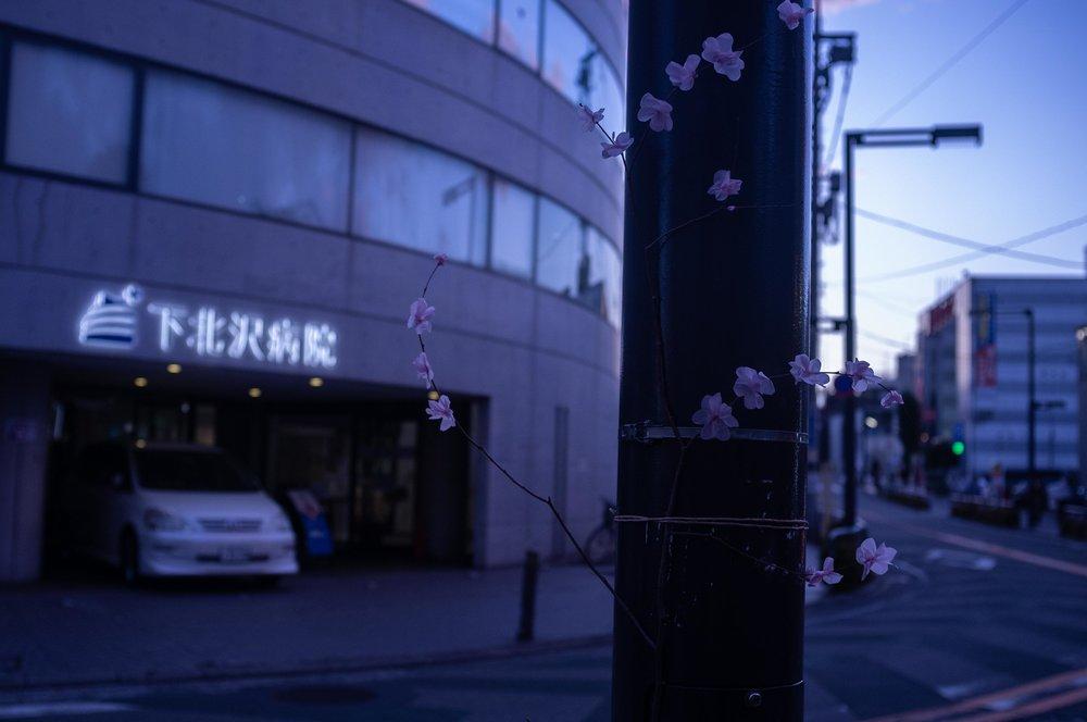 Sakura-0121.JPG