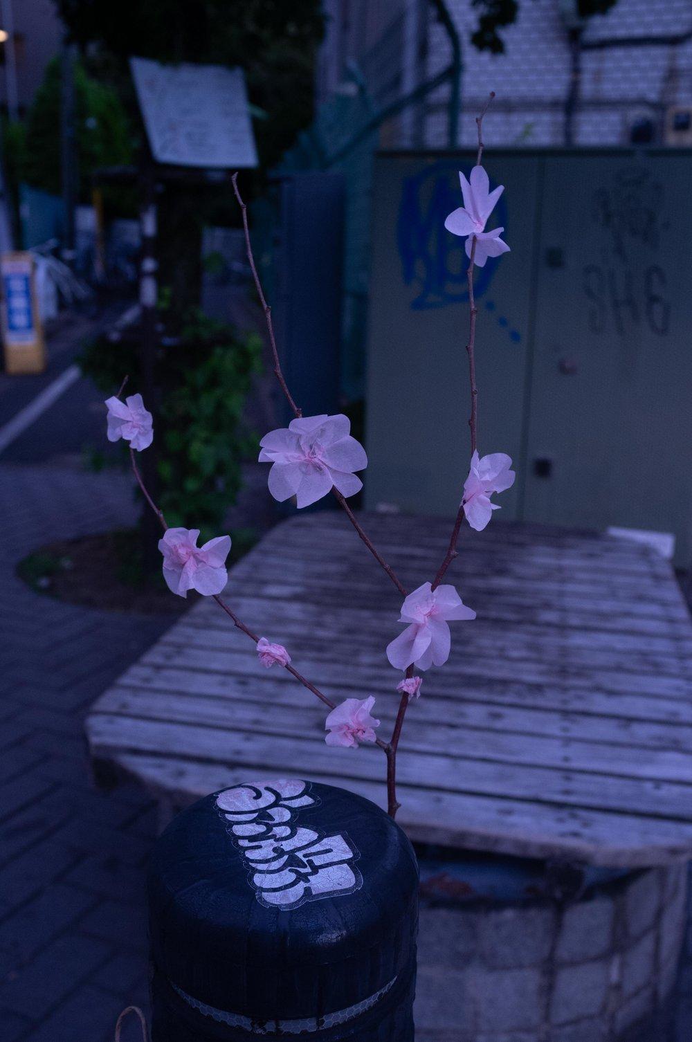 Sakura-0114.JPG