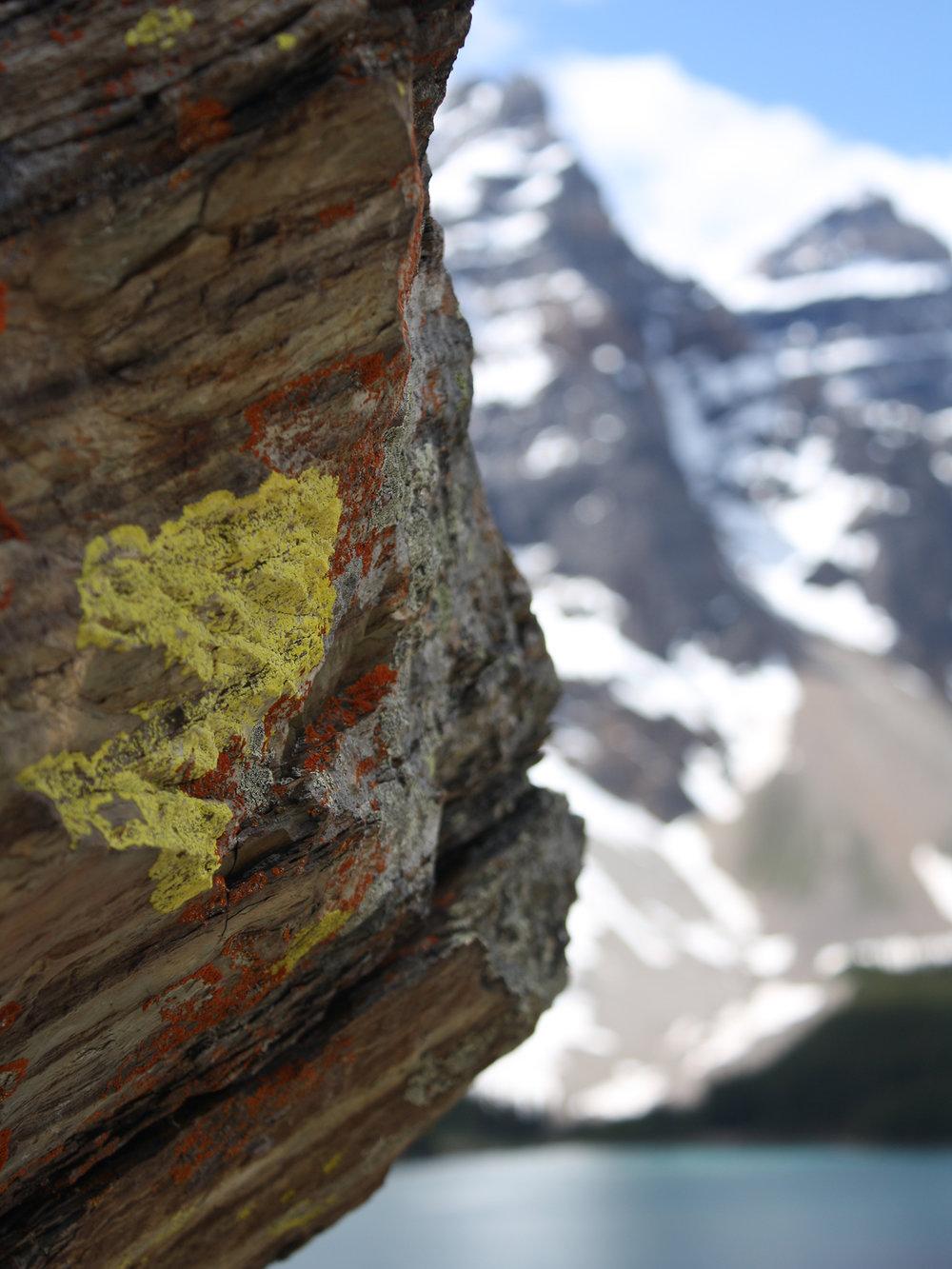 Moss on the rock at Lake Moraine, Banff, Alberta, Canada
