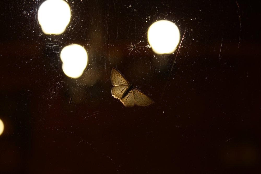 Moth in the lights, Lake Tarawera, New Zealand