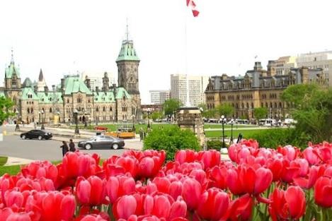 ottawa-tulip-festival.jpg
