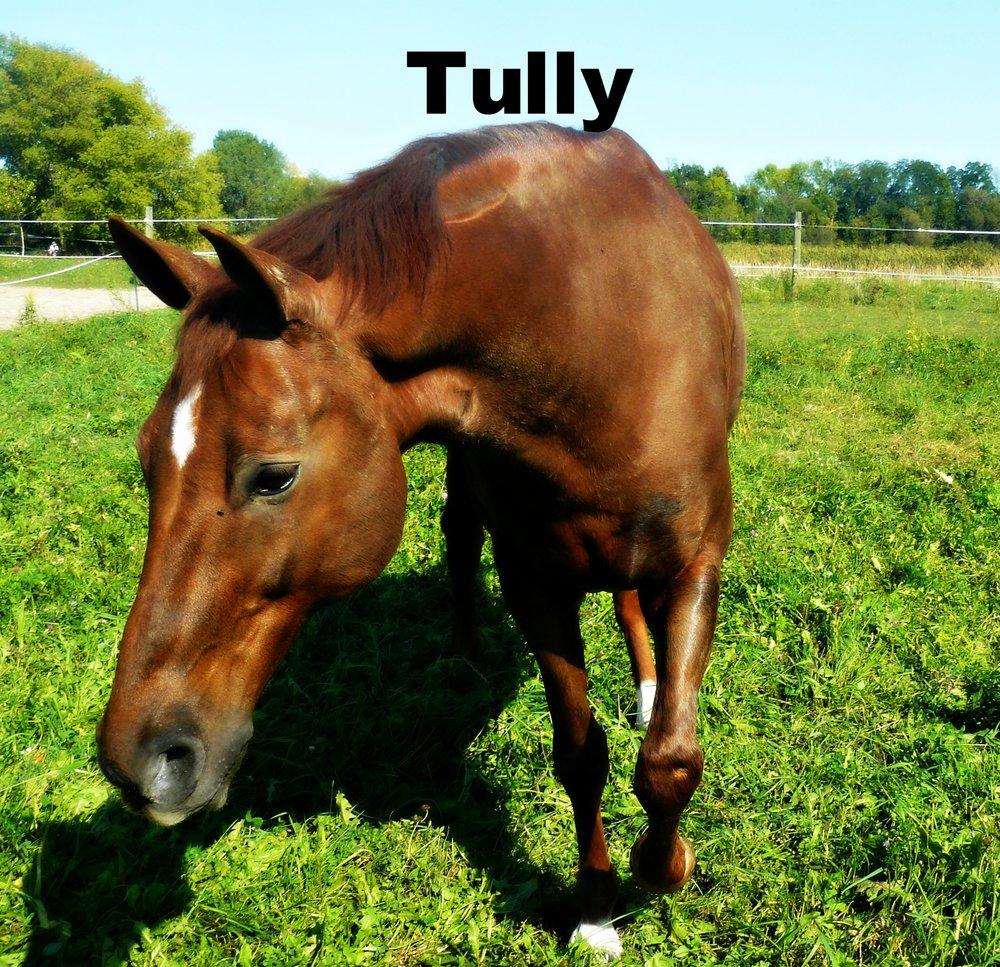 tully 4.jpg