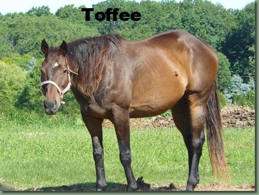 Toffee 1.jpg