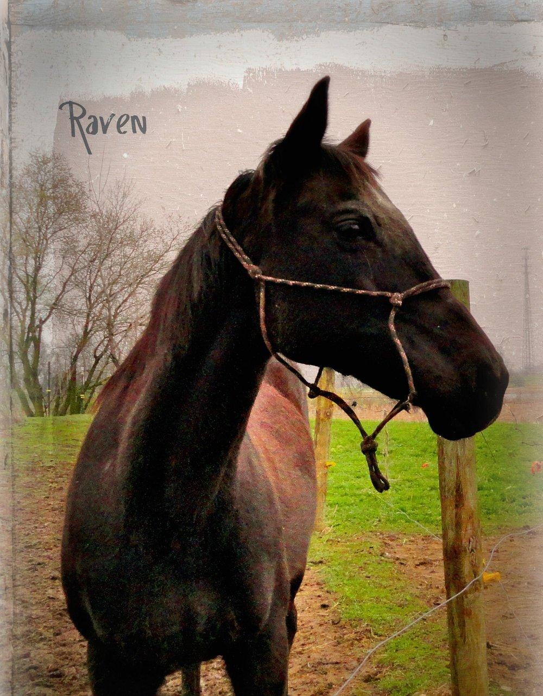 Raven 0329.jpg