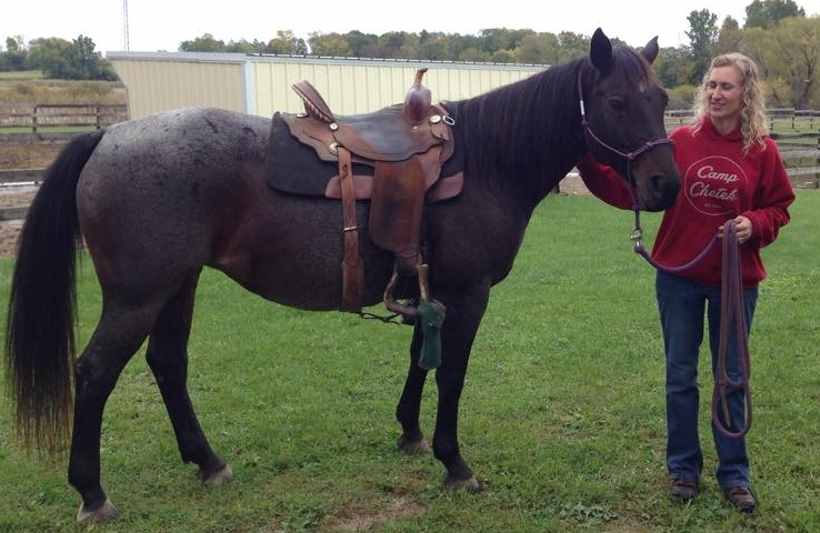"""SALLY got adopted today!!  Congratulations Stacey Mitchell of Chetek, Wisconsin on her adoption !! Sally will eventually become the """"lead"""" trailhorse on rides led by Stacy at the camp she lives near. Super excited for both of them!!"""