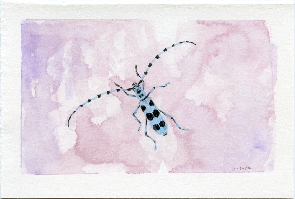 Blue Longhorn Beetle