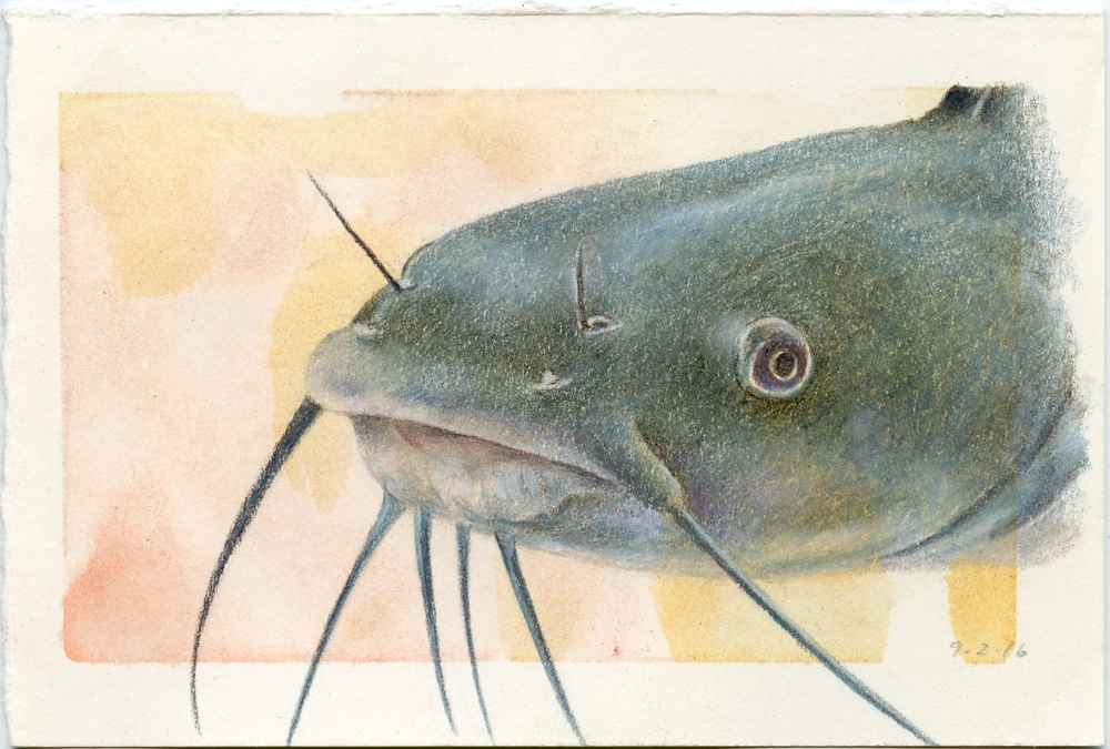Channel Cat Fish