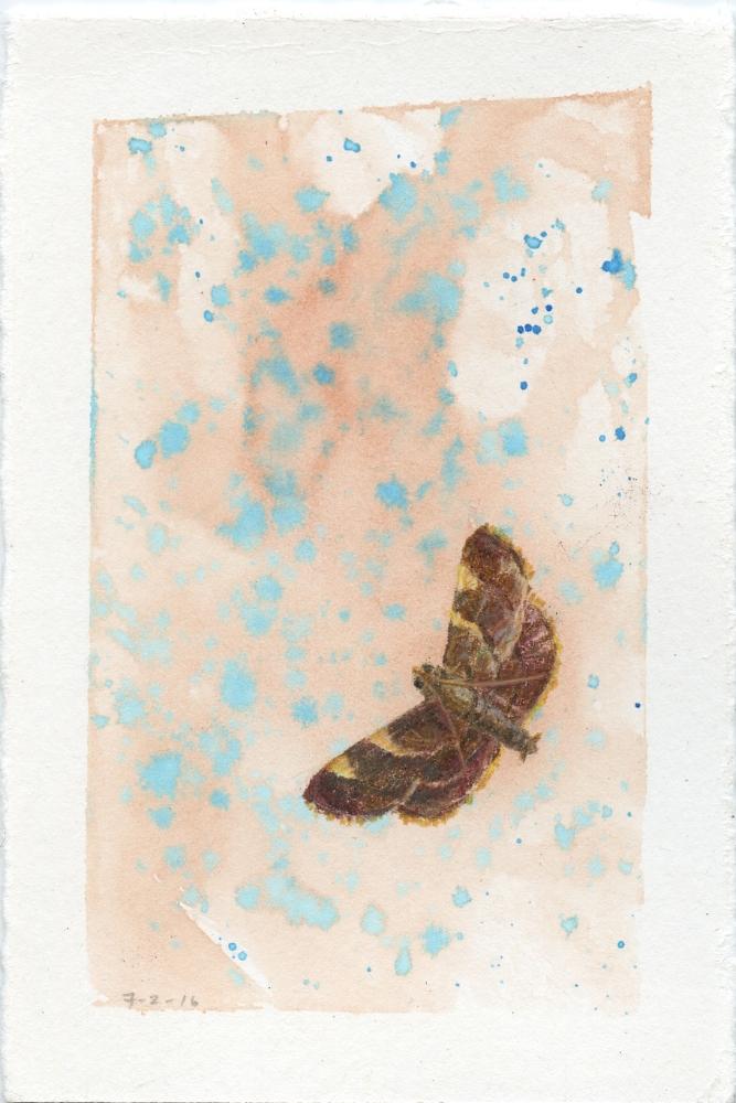 Yellow Fringed Dolichomia Moth
