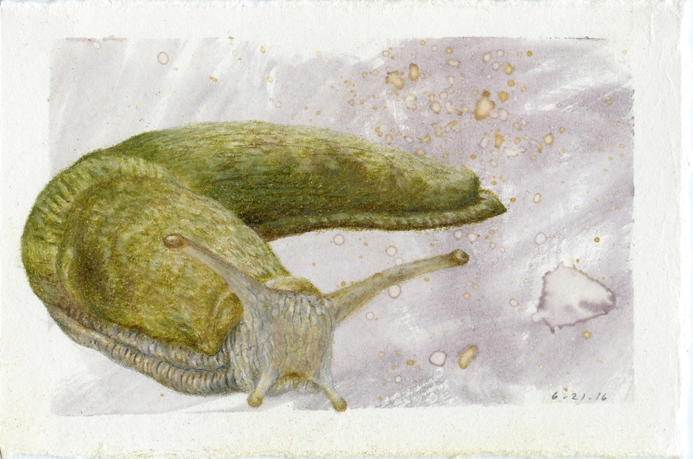 Banana Slug
