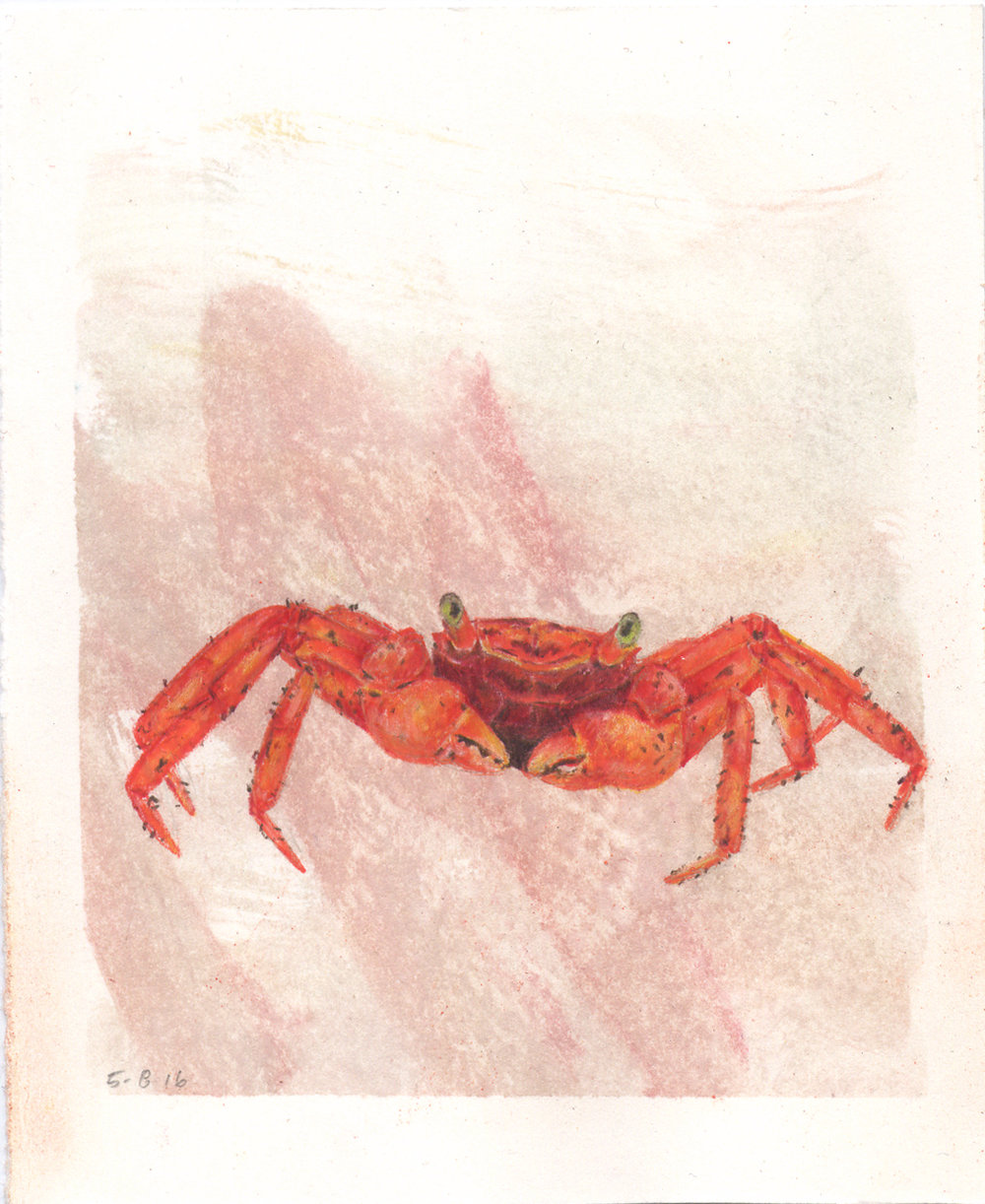 Mount Silam Red Crab