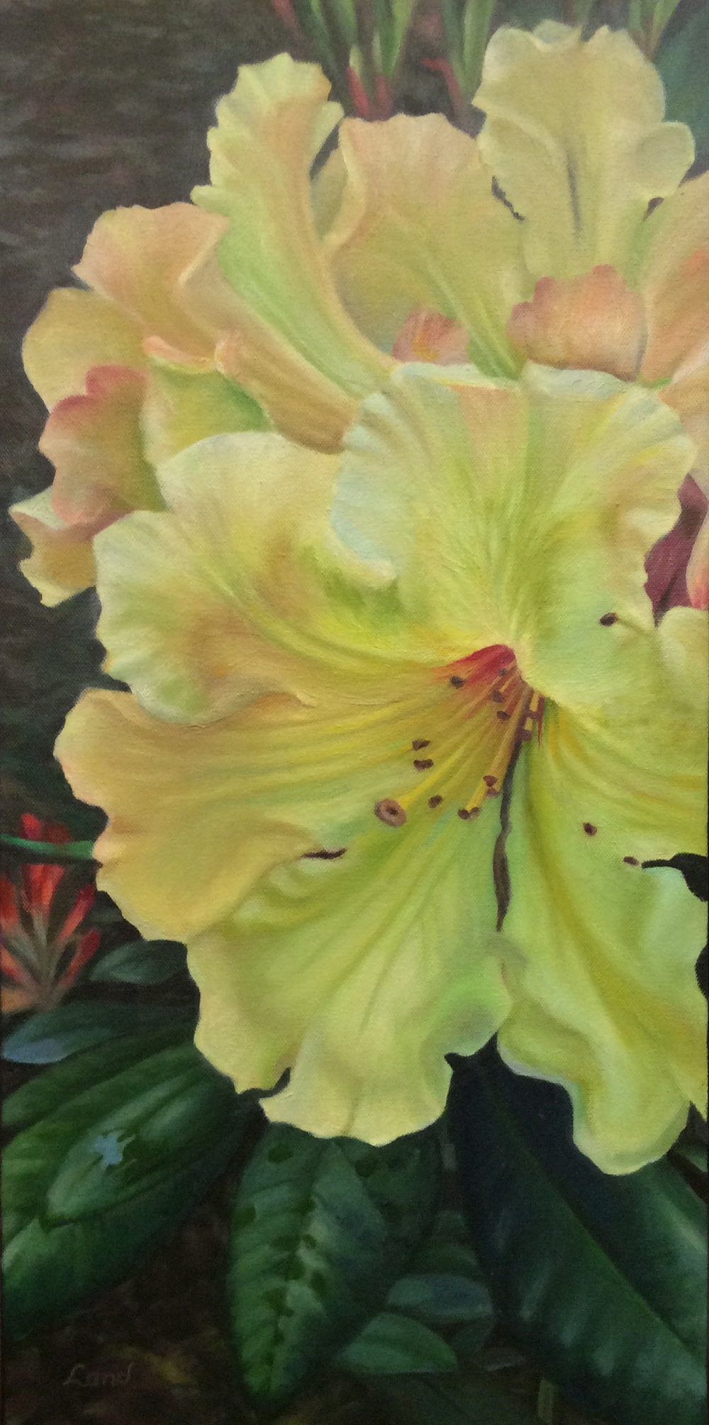 Yellow Rhododendron  in oil, 2017