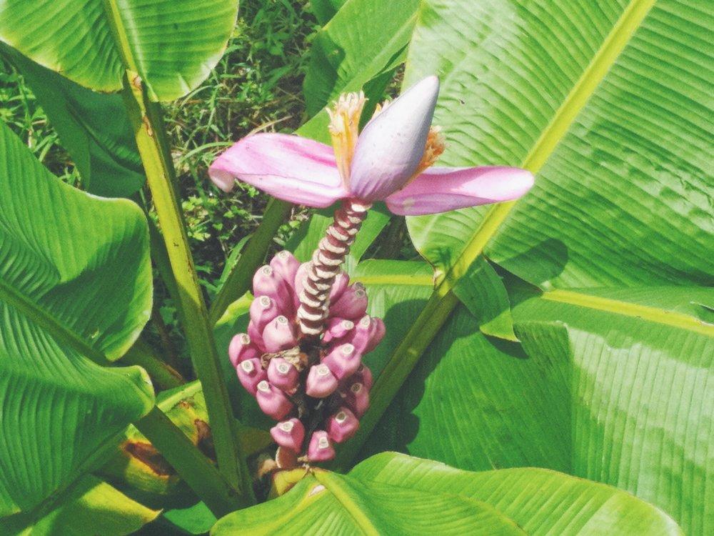 Blog - Plant- Bali - DROP