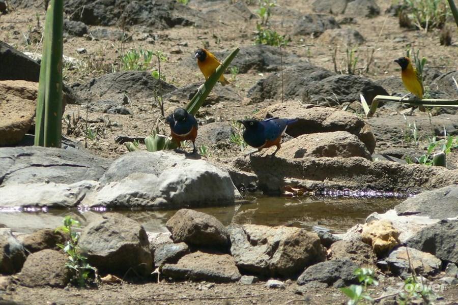 birds at pool.jpg