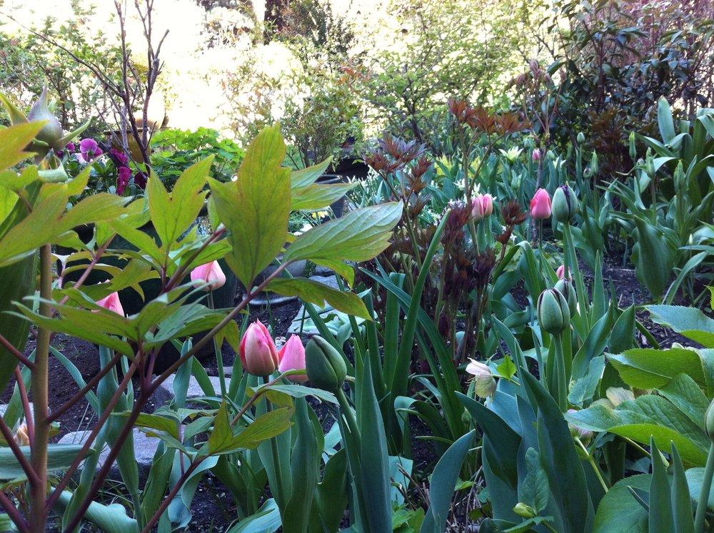 Rachel Prince Gardens