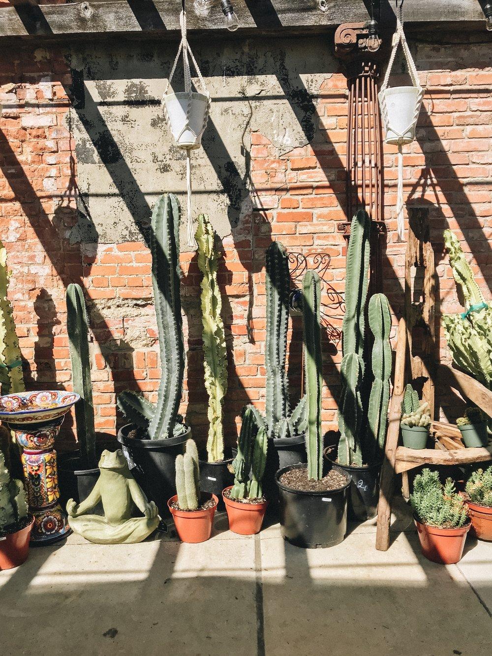 Best Plant Shops in Dallas | Ruibal's