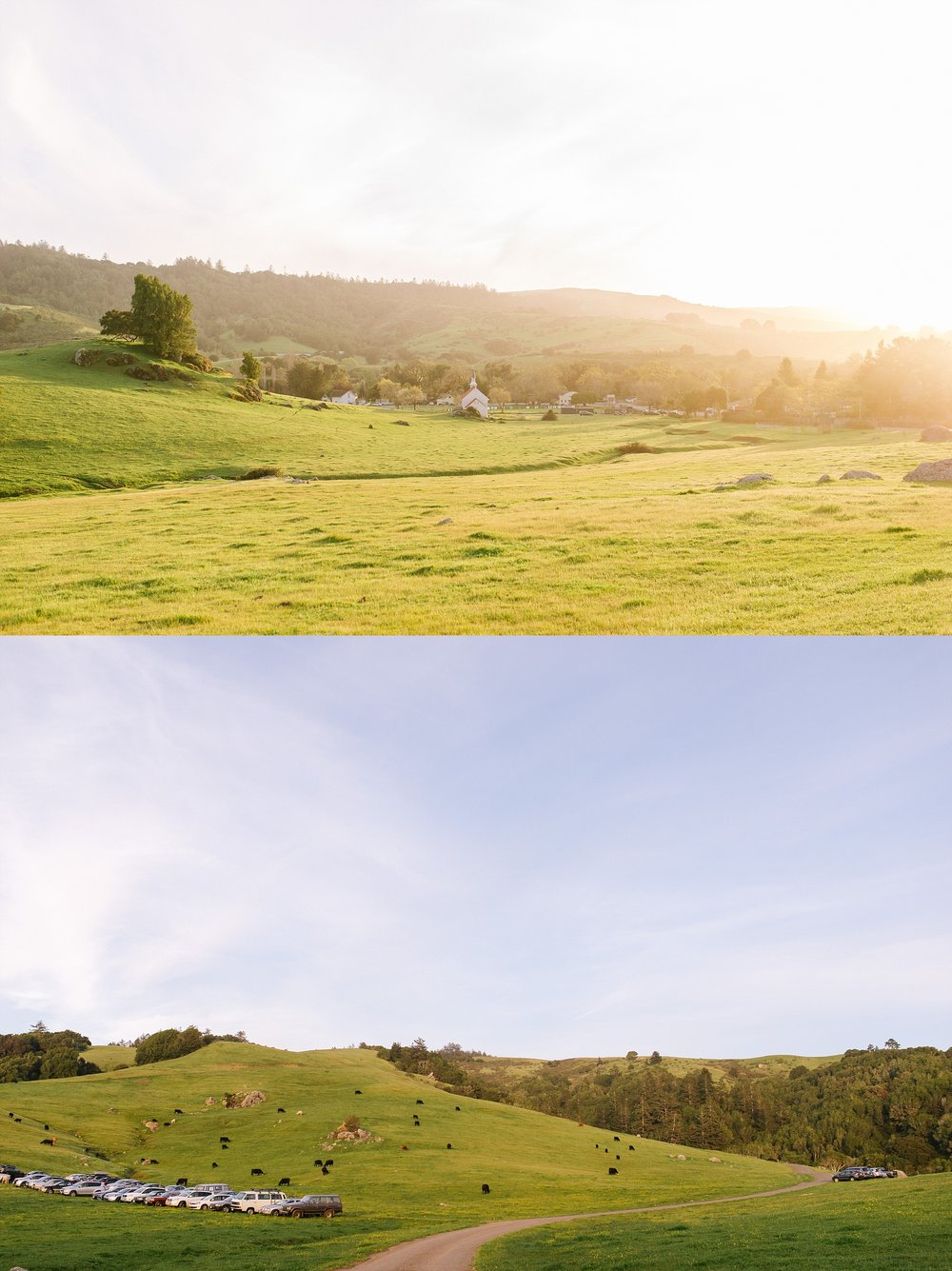 nicasio_backyard_intimate_wedding_chelseadierphotography_0060.jpg
