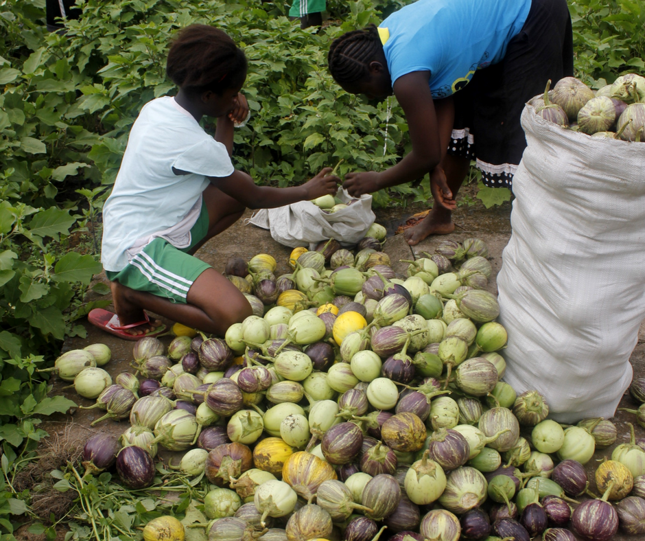Liberia Mission's Farm Provides Fresh Produce For Our Cooks