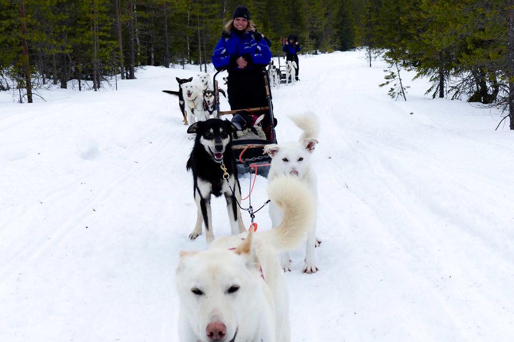 Een Hondensledetocht in Magisch Lapland
