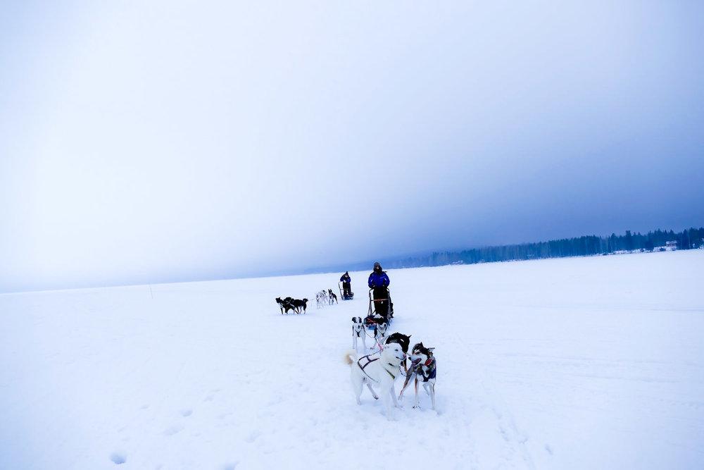 Hondensleeën over bevroren meer