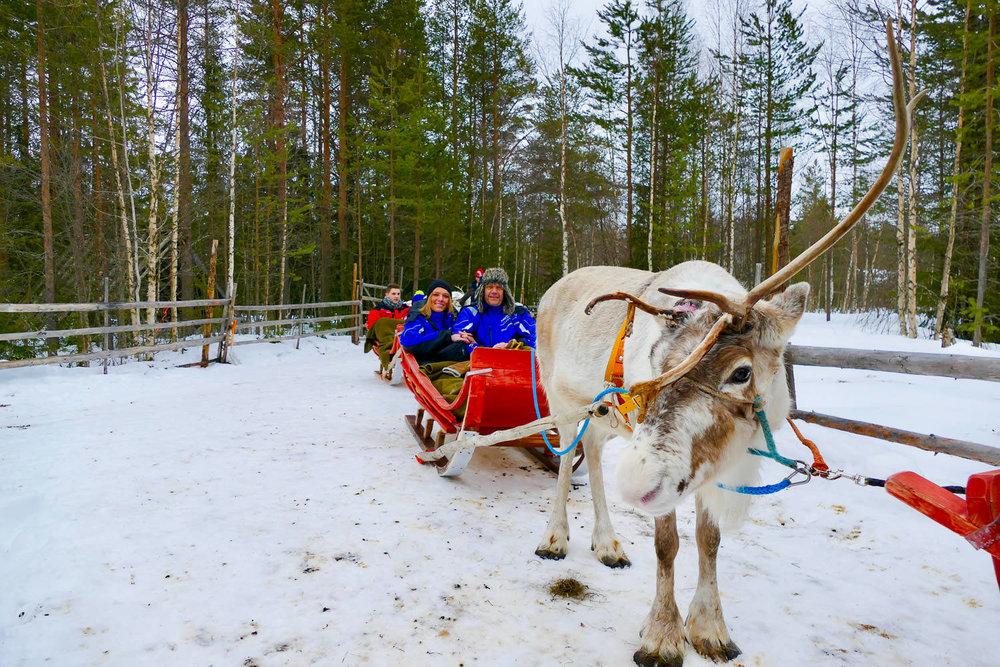 Rendiersledetocht Lapland