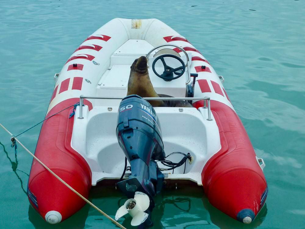 Zeeleeuw in boot