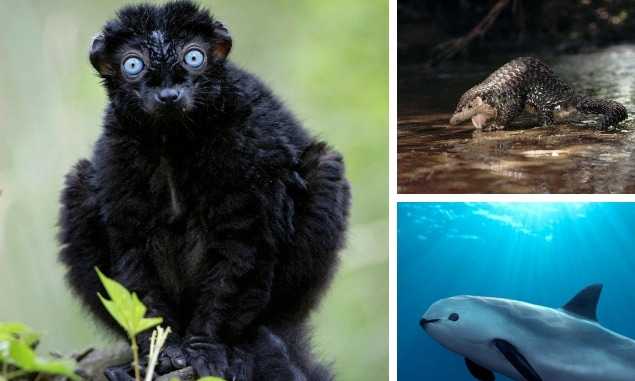 The vanishing animals that future generations will never see    Some of the world's most exotic animals could be extinct within months, conservationists have warned, with future generations growing up in a world without many of the species that are alive today.