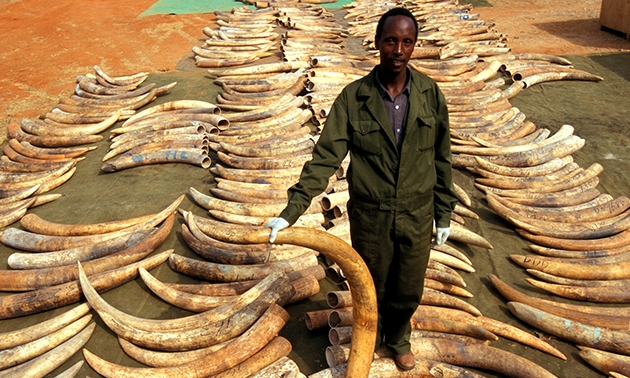 Making it easier and safer for informants to turn in wildlife criminals    At over $23 billion annually, the illegal trade in wildlife and wildlife body parts is the fourth most profitable illegal racket on Earth, topped only by drugs, weapons and human slavery.