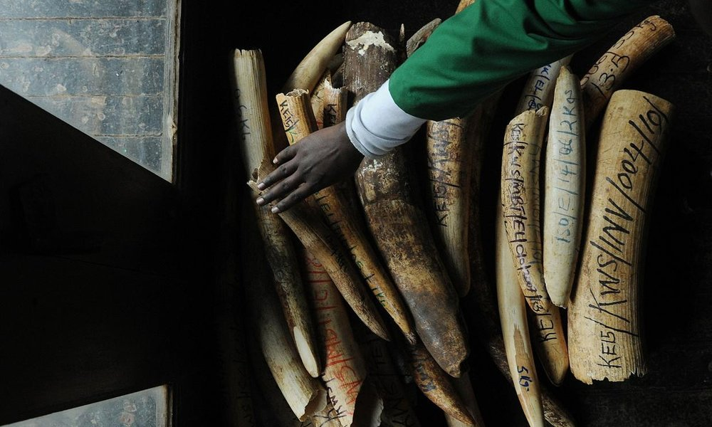 The UK is world's largest legal ivory exporter, experts warn    The UK is the world's largest exporter of legal ivory, fuelling consumer demand for the product and the poaching of elephants for their tusks, environmentalists have warned.