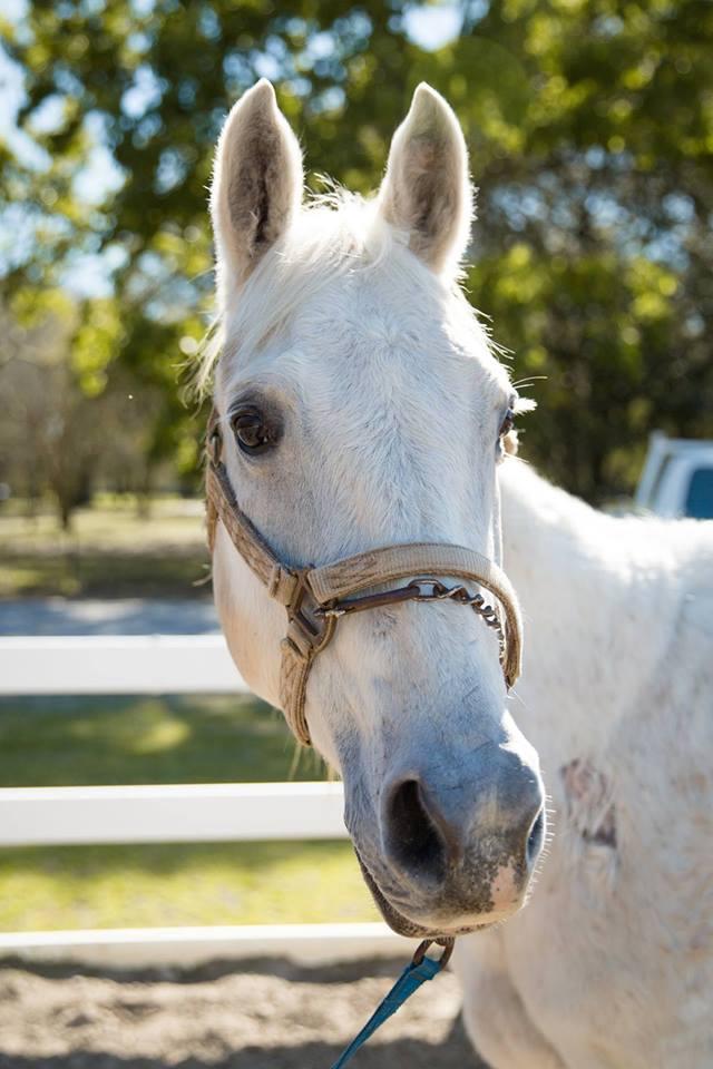 humane Society MG Horse1.jpg