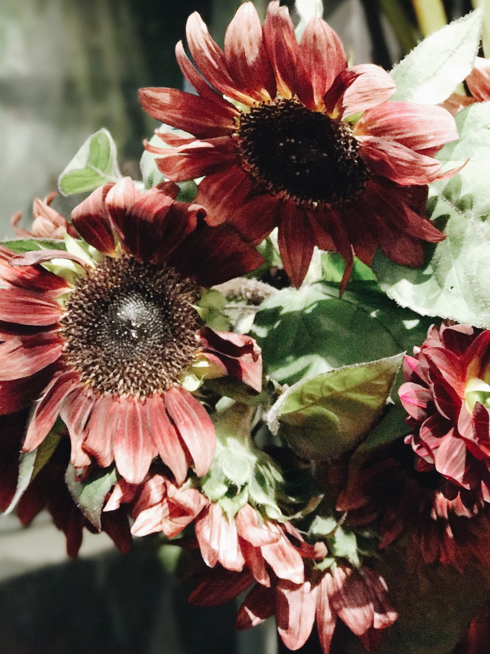 Fall Flowers 101, Brown Sunflowers, Nyla Free Designs Inc.