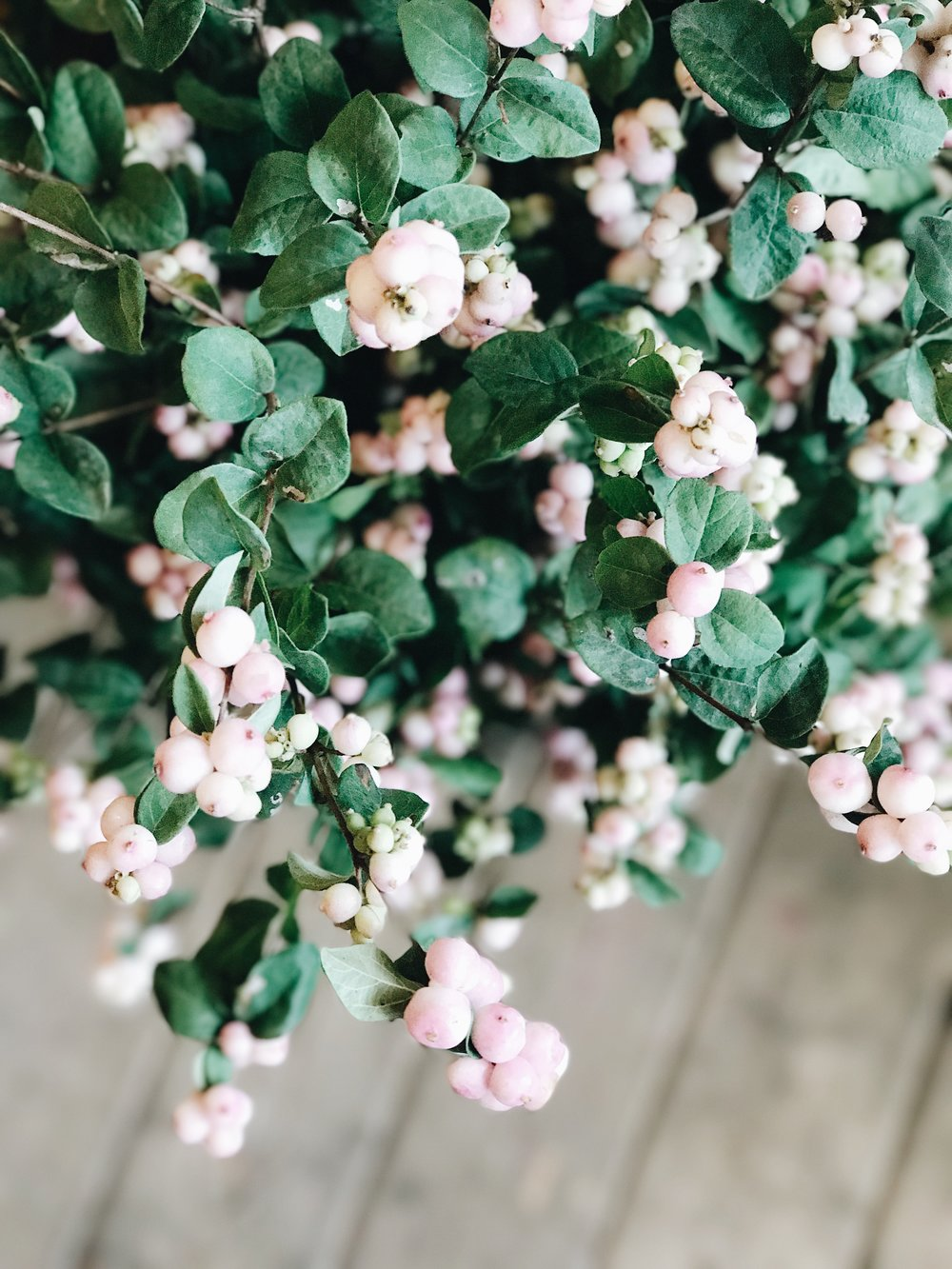 Fall Flowers 101, Snowberry, Nyla Free Designs Inc.