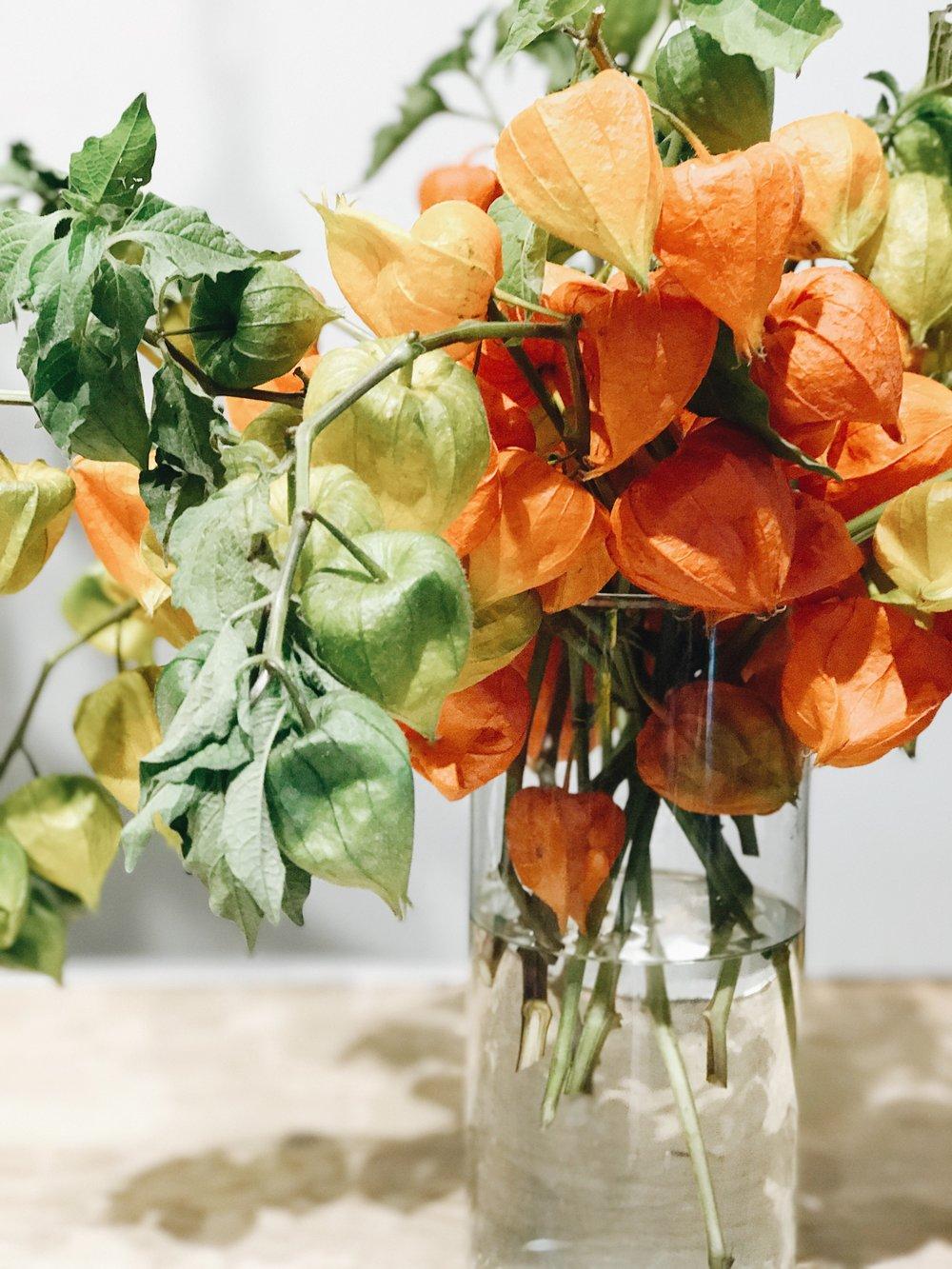 Fall Flowers 101, Chinese Lanterns, Nyla Free Designs Inc.