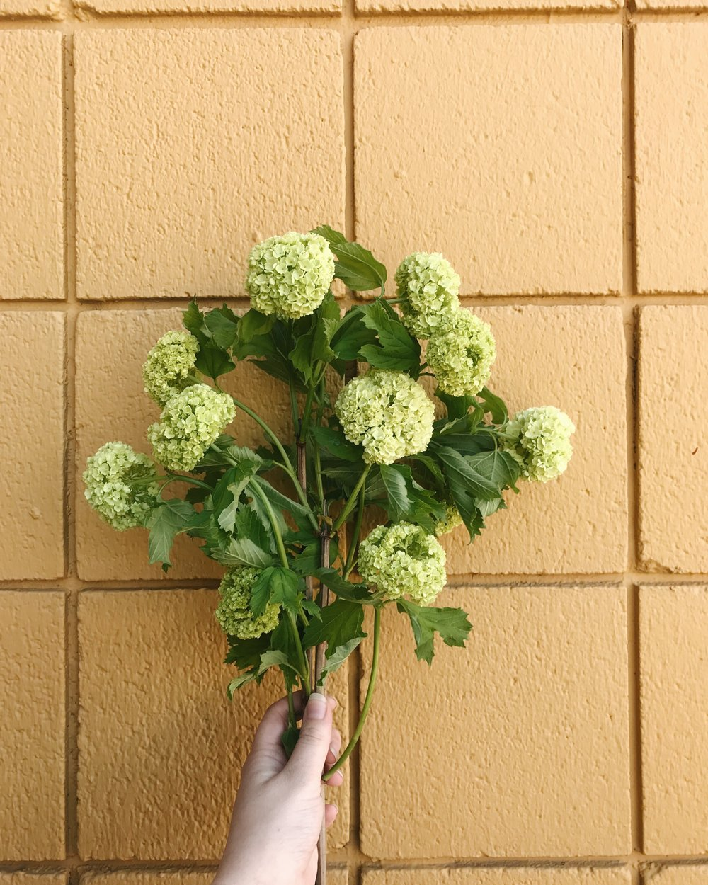 Spring Flowers 101, Viburnum, Bringing fresh flowers into your interior design and home decor, Nyla Free Designs, Calgary Interior Designer