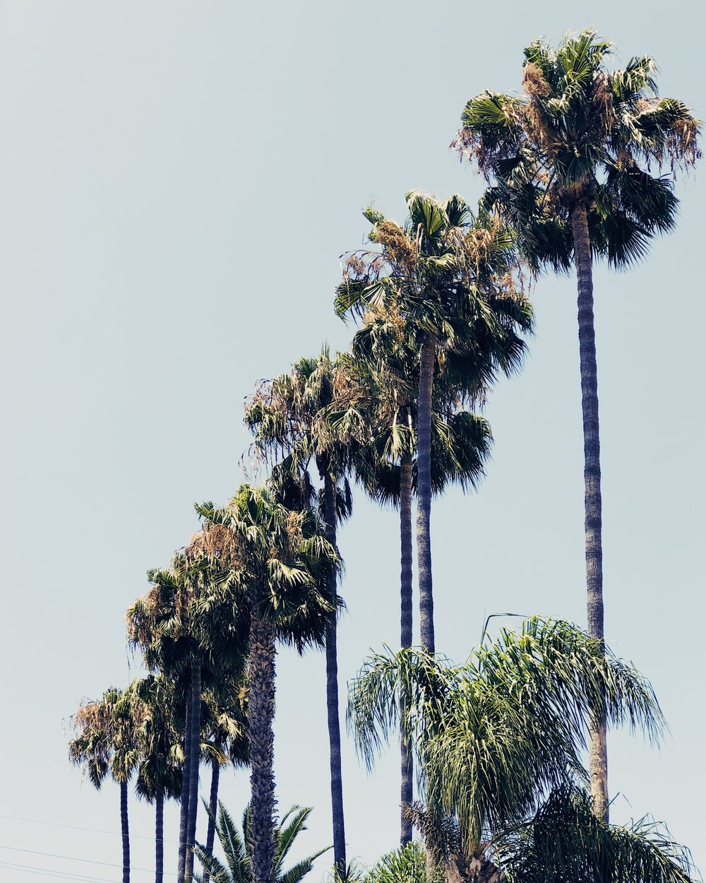 California Palm Trees, Nyla Free Designs Link Love