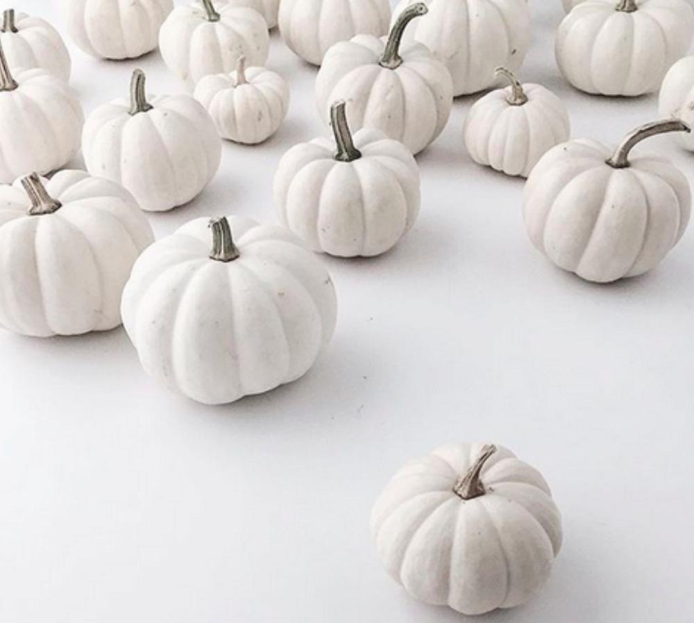 WhitePumpkins.png