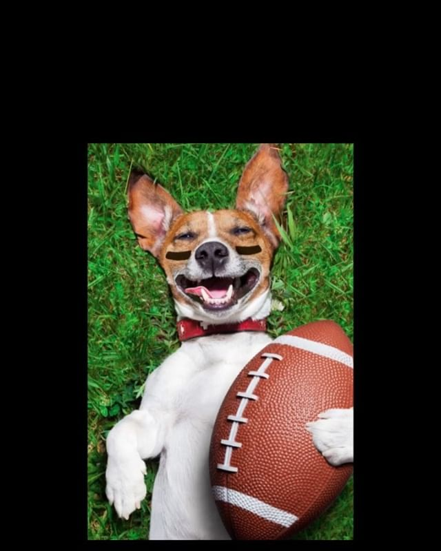 PUPPY BOWL viewing party on our brand new 120inch screen.  Sunday at 3:00pm . Followed by . The Château le woof  Super Bowl Party At 6:30pm. . FOOD, FOOTBALL, DRINKS, DOGS. . . . #astoriaqueens #astoriaeats #dogcoffee #astoriany #astorialife #dogcafe #puppybowl #puppybowlfans #puppybowlparty #footballtime #superbowlparty #superbowlfood #superbowl2019 #footballdog