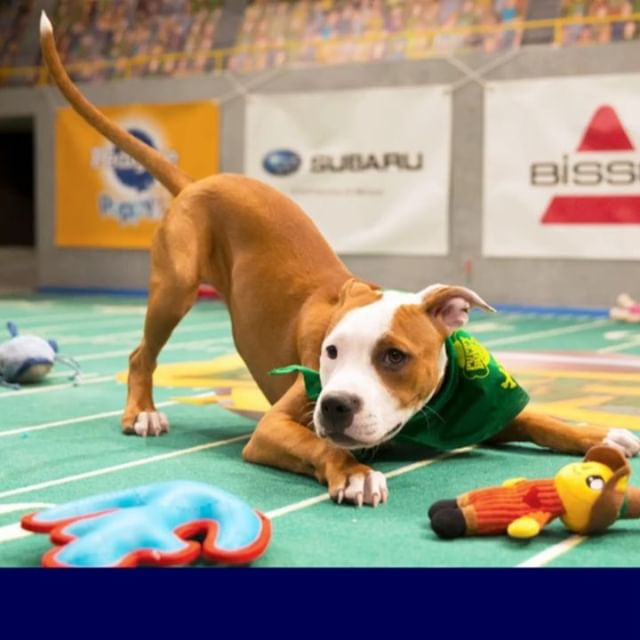 🏈🐾Puppy Bowl Viewing Party🐾🏈 3:00pm . Super Bowl Viewing Party  6:00pm. . FOOTBALL, FOOD, DOGS, DRINKS!! 🏈 . . . #football #footballsunday #puppybowl #newyorkfootball #dogcafe #dogcoffeeshop #astoria #astoriaqueens