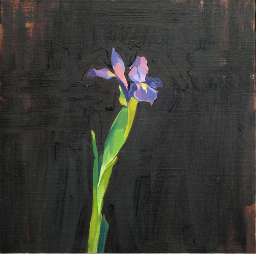 japanese iris , 2014 oil on linen 15 3/4 x 15 3/4 inches