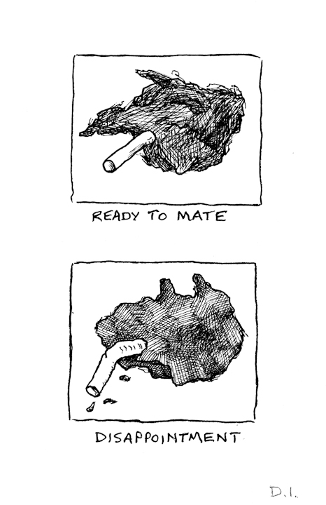ready to mate,  2009 ink on paper 5 5/8 x 3 3/4 ""