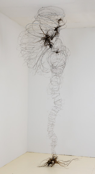 Loosestrife , 2011-12 stainless steel wire, plastic tubing, roots 118 x 57 x 36 inches