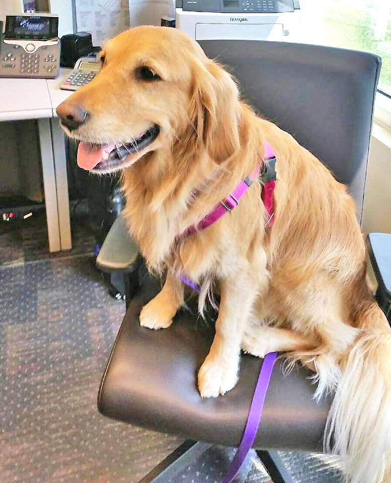 Saylon    is       a six-year-old Golden Retriever who loves to dance and play with her Frisbee and ball. She adores everyone she meets.