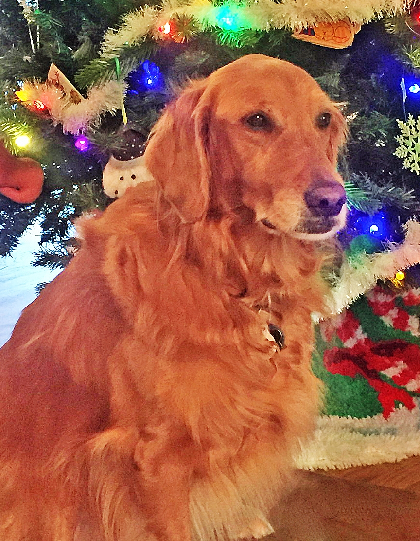 Allie    is a nine-year-old Golden Retriever with a perpetually youthful spirit who is an instant friend of everyone she meets.