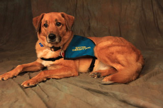 Baxter    was rescued from a shelter when he was just a frightened pup. He developed into the quintessential therapy dog!