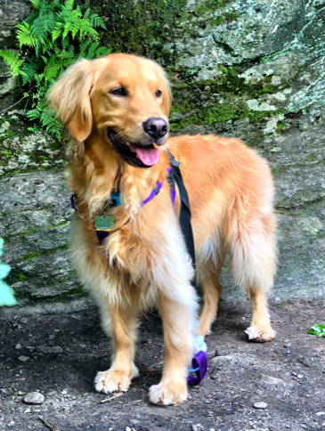 Faith    (younger sister to Hope) is an exuberant and wiggly Golden Retriever whose tail never stops wagging. P.S. She loves to cuddle!