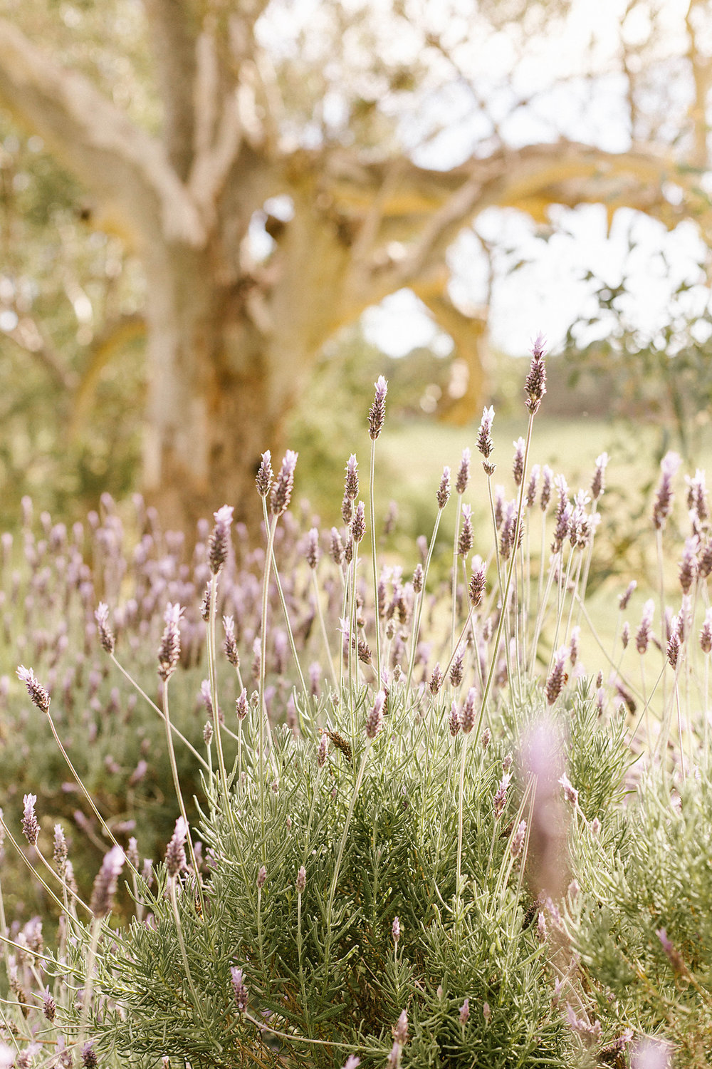Barossa Valley Wedding Photographer