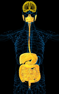 Gut-Brain-Connection-250x400.jpg