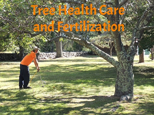 Tree Health Care and Fertilization