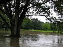 flooded tree.jpg