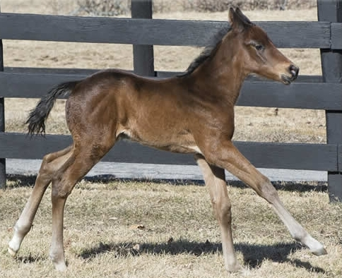 Street Sense colt out of Ouchy Night by Cactus Ridge – born February 12, 2016